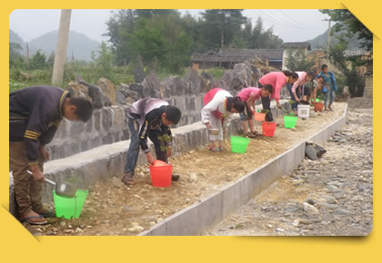 Tree Planting and Conservation
