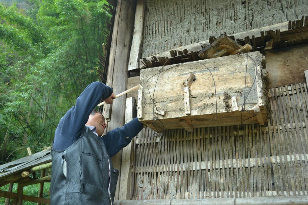 养蜂人将传统养蜂木桶挂在屋外