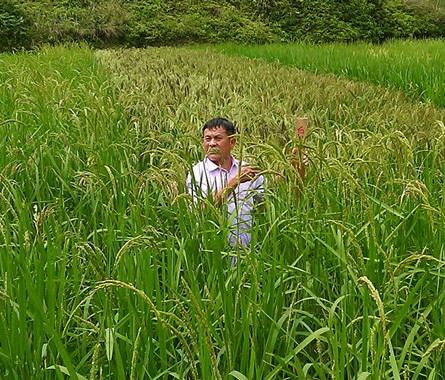 社区支持农业作为方法──社区伙伴相关工作的介绍与反思